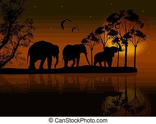 elefantes, silueta, en, áfrica, cerca, agua