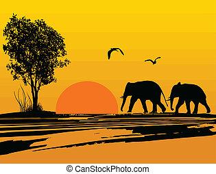 elefantes, silueta, en, áfrica