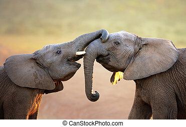 elefantes, tocar, um ao outro, suavemente, (greeting)