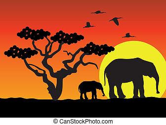 elefanti, in, africa
