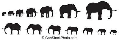 elefants, zeven, silhouette, lijn
