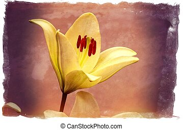elegant beautiful flower blooming white lily on background
