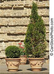 elegant ceramic tuscan pots with plants on florentine...