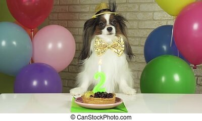 Elegant Dog Papillon sits at a table with a birthday cake...