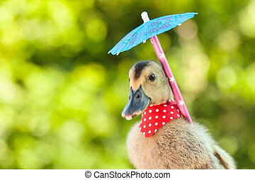 Elegant duckling with red scarf and umbrella