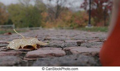 Elegant female legs walking away in autumn park - Beautiful...