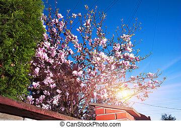 Elegant magnolia flowers