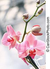 Elegant orchid flower background