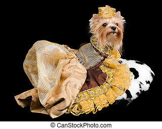 Elegant pet/ dog clothing