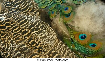 Elegant wild exotic bird, colorful artistic feathers. Close up of peacock textured plumage. Flying Indian green peafowl