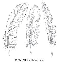 elegant writing feathers on white