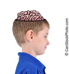 elegante, educación, cerebro, niño
