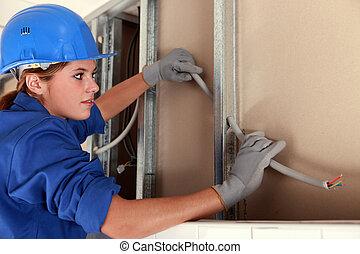 elektrikář, samičí