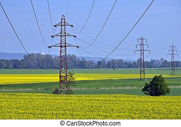 elektrizität, masten, in, a, feld, von, oilseed, rape.