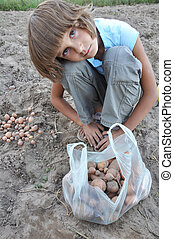 child gathering potatoes in the field