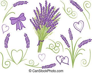 elementer, konstruktion, lavendel, illustration