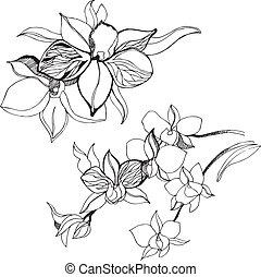 elementi floreali, disegno