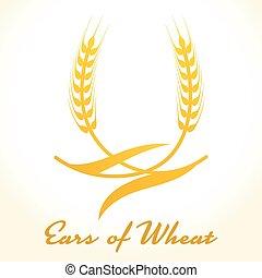 elemento, ou, arroz, trigo, illustration., orelhas, símbolo, centeio, isolado, packaging., experiência., cerveja, vetorial, desenho, cevada, colheita, branca, etiqueta, icon., pão