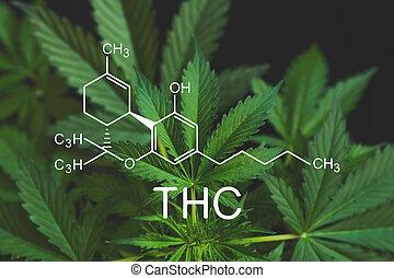 elementos, cbd, crescendo, indústria, cannabis, business., ...
