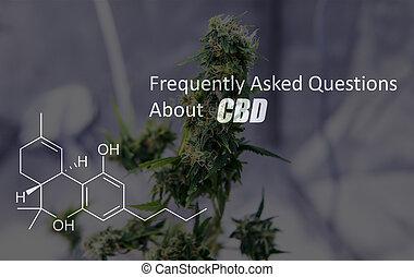 elementos, eua, cbd, thc, médico, trichomes, interior., marijuana, pronto, colheita