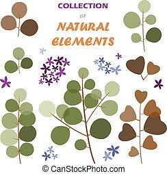 elementos, natural, colección