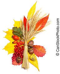 elementos, trigo, hojas, -, viburnum, otoño, briar, bellota, rowan, multicolor