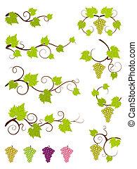 elementos, uva, set., videiras, desenho