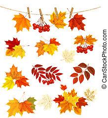 elements., צבעוני, leaves., סתו, וקטור, עצב, רקע, illustration.