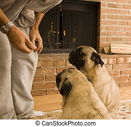 elemosinare, cani, trattare
