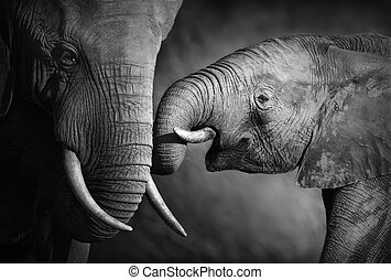 Elephant affection (Artistic processing) - Elephants showing...