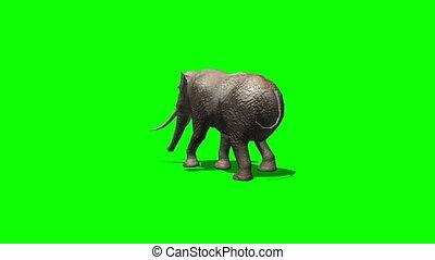 elephant ambles past - green screen 2