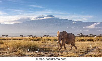 Elephant and Mount Kilimanjaro