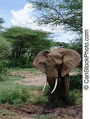Elephant and mud