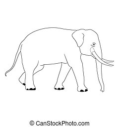 elephant Asia walking, graphics disign vector outline...