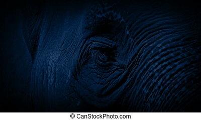 Elephant At Night Closeup