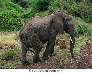 Elephant at road.