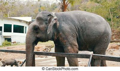 Elephant at zoo khao kheo Thailand