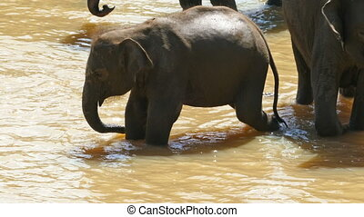 Elephant baby in the river - Sri Lanka