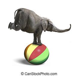 Elephant balancing on a colorful ball