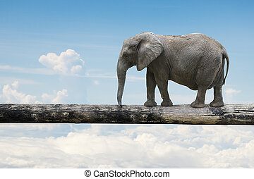 Elephant balancing on tree trunk, with nature sky...