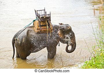 Elephant bathing in streams