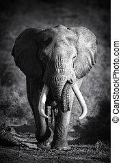 Elephant Bull (Artistic processing) - Large Elephant Bull...