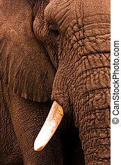 Elephant Close Up