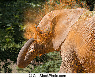 Elephant cooling off with sand. - Elephant cooling off by...