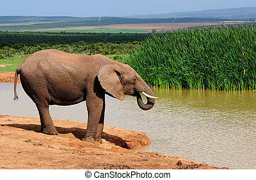 Elephant drinking water at Harpoor