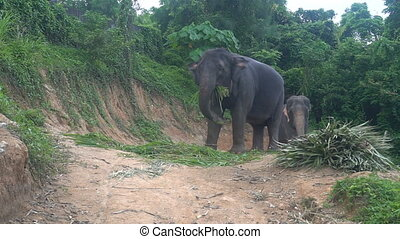 Elephant eating palm leaves - View of an elephant eating...