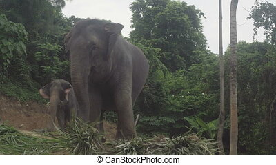 Elephant eating palm leaves