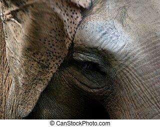 Detail of an elephants face