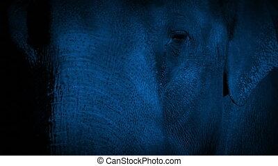 Elephant Face At Night