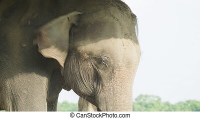 Elephant face in the national park Chitwan, Nepal.